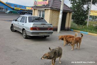 Photo: кругом шашлык ))