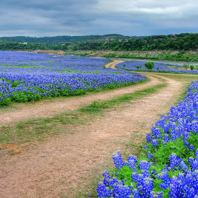 Road through Bluebonnets by Cathy Hood - Landscapes Prairies, Meadows & Fields