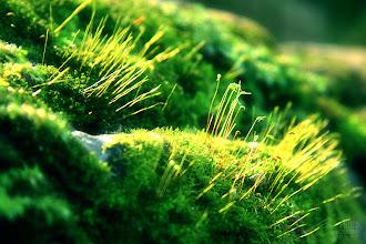 Photo: Rêu