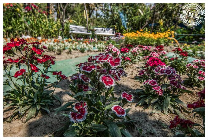 大東溼地公園陶園一堆花