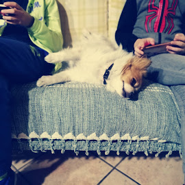Leave me alone by Enry Ci - Animals - Dogs Portraits ( domestic, sofá, children, vintage, animal, dog, people, funny, nice )
