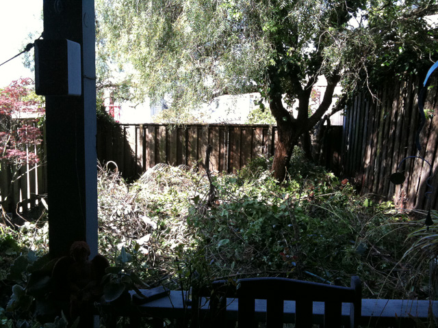 Photo: Another view of the yard growth. Even the cats refused to go back there.