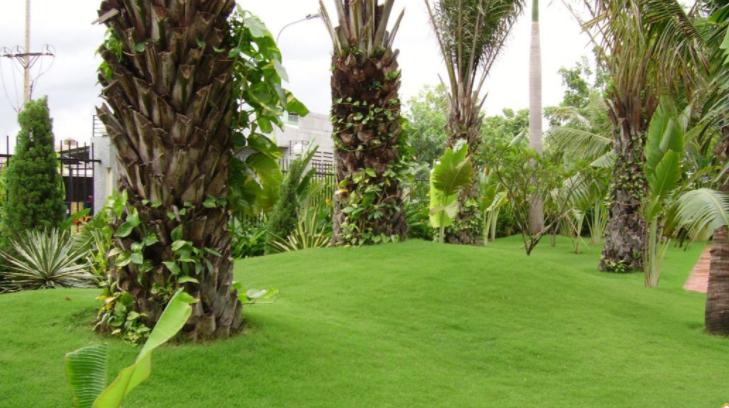 Cần chọn đơn vị trồng cỏ uy tín, cạnh tranh