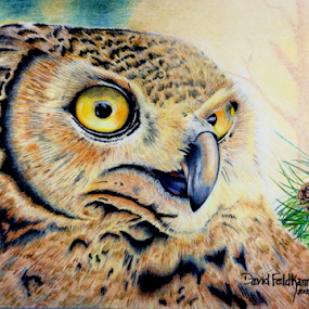 Hooter by Dave Feldkamp - Drawing All Drawing ( colored pencil, art, owl, feathers, drawing, eyes,  )