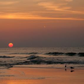 Sunrise by Anita Frazer - Landscapes Sunsets & Sunrises ( sunrise, ocean,  )