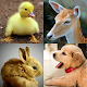 2048 Cute Animals - Puzzle for Girls (game)
