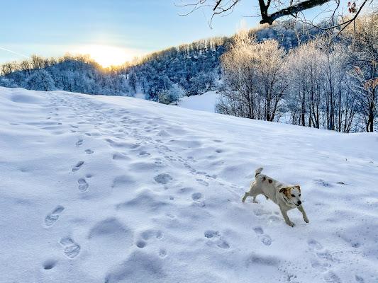 Correndo sulla neve  di Renata Roattino@jhonninaphoto