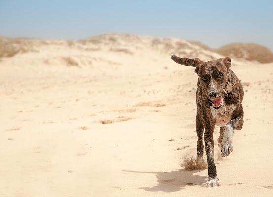 Bau Bau nel deserto di marikarossiphotography