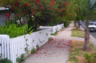 Photo: Flower deadfall Santa Barbara, California, June 19, 2012.
