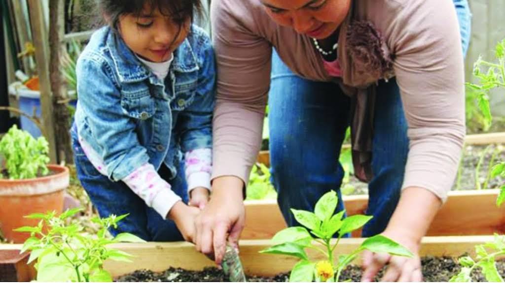 Two people kneeling down to plant vegetable seedlings.