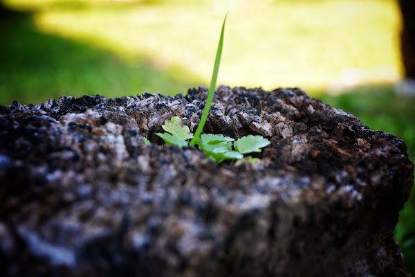 Verde speranza... di akidelpre