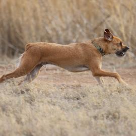 Enjoying the day by Scott Thomas - Animals - Dogs Running ( running, outdoors, nature, cat, dog )