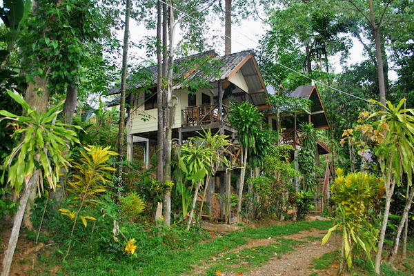 Overnight stay in a jungle bungalow