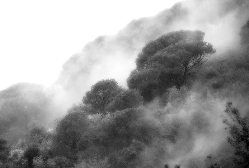 Abbracciando gli alberi di Luciano Fontebasso