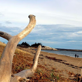 Deadwood on the Beach by Don Cailler - Nature Up Close Trees & Bushes ( sand, deadwood, ocean, beach, people,  )