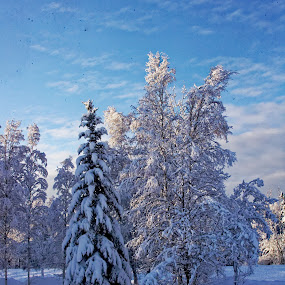 Everything Frosted and Iced by Rev Marc Baisden - Landscapes Weather ( time, adventure, winter, seasons, snow, alaska )