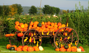 Photo: Pumpkin art college