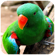 Parrot Wallpaper HD Download for PC Windows 10/8/7