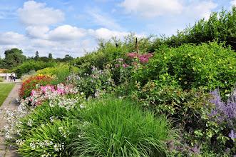 Photo: RHS gardens Wisley - mixed border