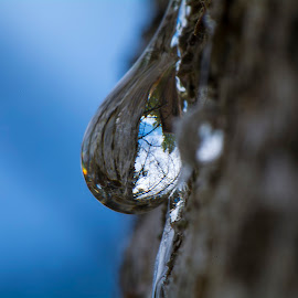Sap from Pine tree macro by Kevin Adams - Nature Up Close Other Natural Objects