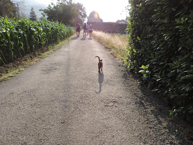 Following di AndriNadli