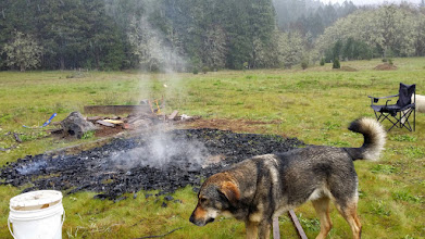 Photo: The rain came at just the right moment to put the fire out and save the char to use as biochar.