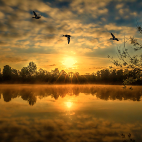Ducks across a sunrise by Peter Wyatt - Landscapes Sunsets & Sunrises ( water, clouds, dawn, waterscape, silhouette, sunset, ducks, lake, sunrise, landscape, sun )
