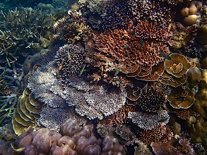 Photo: a coral garden display, Ao Maeyai