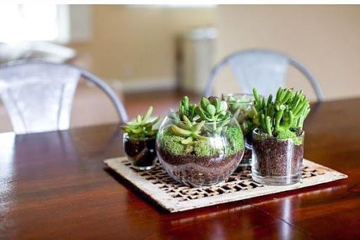 1000+ DIY Terrarium Miniature Ideas 4.1 screenshots 1
