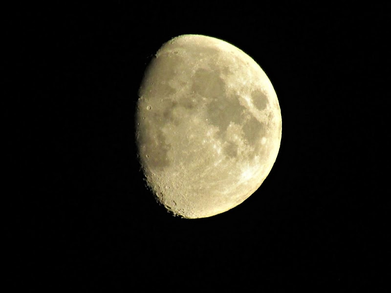 moonlight di eraclea05