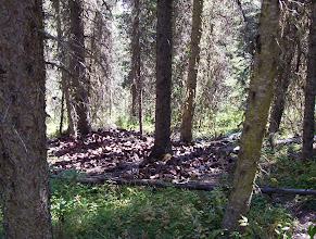 Photo: Tin Can Dump, Barkerville BC