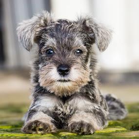 Unyuuu...... by Donny Novianus - Animals - Dogs Puppies