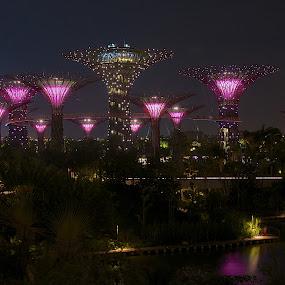 Gardens By The Bay by Samson Calma - Landscapes Starscapes ( pwclandmarks, landmarks, gardens by the bay, marina bay, singapore )
