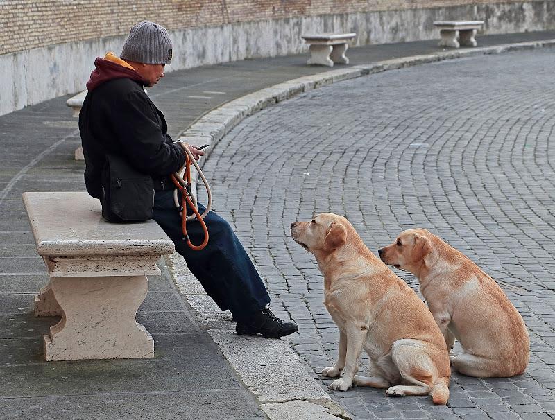 Dogsitter (incomunicabilità) di romano