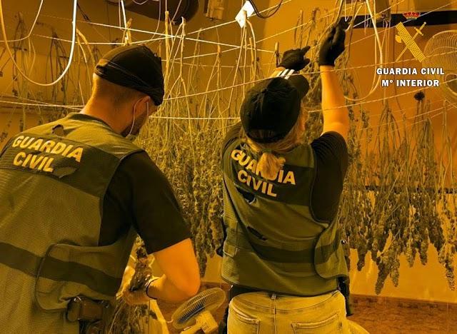 Los agentes de la Benemérita, con plantas halladas.