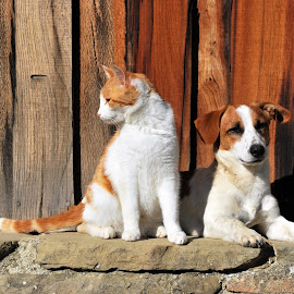 Cat and Dog by Alessandro Pinto - Animals - Dogs Portraits ( and, cat, portrait, dog, together )