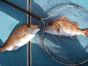 Photo: 真鯛のダブルキャッチ!