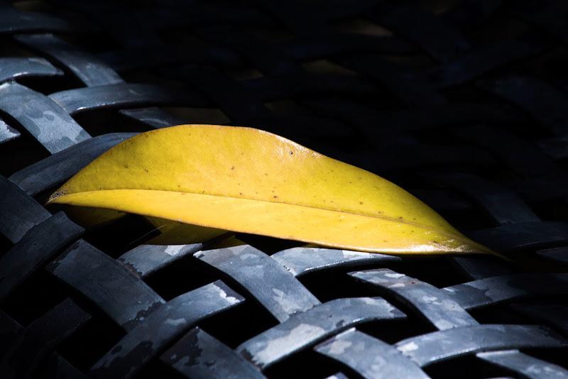 yellow on the metal grey. di Naldina Fornasari