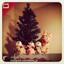 Photo: The ... Cat-Elf on the shelf with Mr.Charlie! #intercer #cat #cats #pet #pets #animal #christmas #beautiful #pretty #sweet #team #petsofinstagram #orange #santa #elf #xmas #tree - via Instagram, http://instagram.com/p/iNd-W3pfjd/