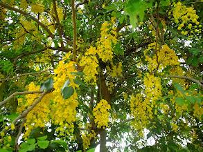 Photo: A beautiful tree!