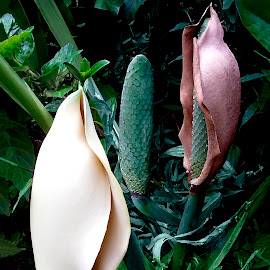 Monstera Flower and Fruit by Joseph Vittek - Nature Up Close Other plants