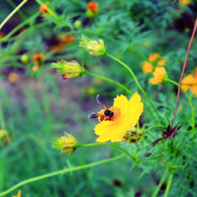 by Prasanna Natarajan - Flowers Flowers in the Wild
