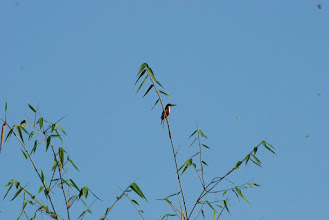 Photo: Four varieties of Kingfishers