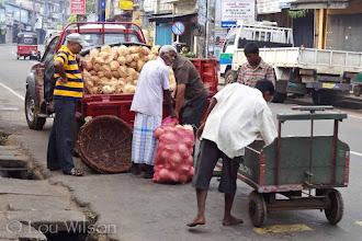 Photo: Coconut Distribution To Street Vendors  Matale Sri Lanka