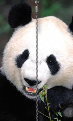 熊貓拉鍊鎖屏