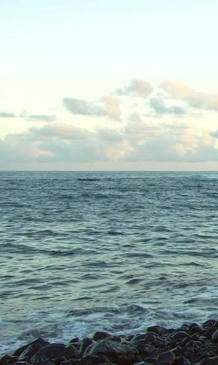 Charming marine coolness