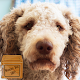 Download poodle live wallpaper For PC Windows and Mac