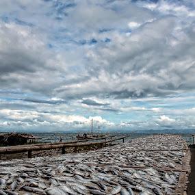 Sea Bounty by Coco Bordeos - News & Events World Events