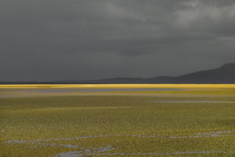 Bassa marea di VIC61