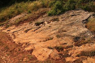 Photo: Hatalmas réteglap a Baradla-tető lábánál, melynek felszínén mészalgák maradványai tanulmányozhatók